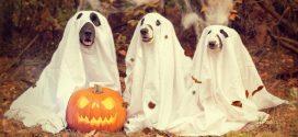 Children Halloween 2017 Movies